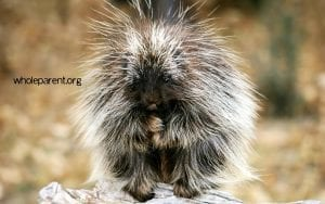 Porcupine Mode: Expressing Dissatisfaction In Your Relationship